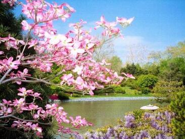 ~~ Pour hater le retour du printemps ~~ E. Goudeau