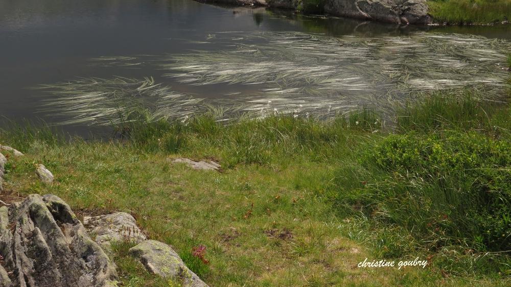 autour du lac Potron (Savoie, près du col de la croix de Fer).