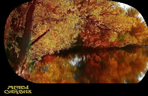 Mist paysages automne