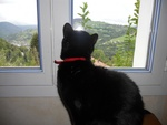 Le chat qui déplaçait des montagnes