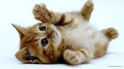 Images d'animaux trop mimi !