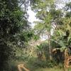 Togo Piste dans la forêt