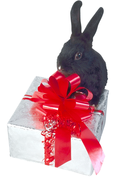Tubes animaux Noël 8