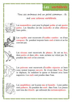 Les Vertébrés (classification)