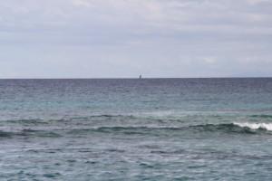 baleine-tival-043.JPG
