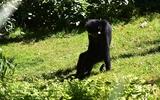 Gibbon - p172