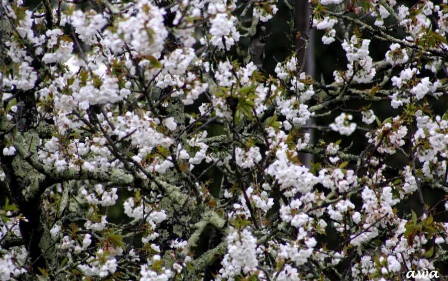 Fleurs, fleurs et fleurs pour ce printemps