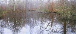 Randonnée en forêt de Ferrières (77)