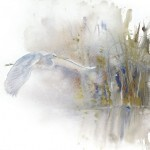 Yves Fagnart aquareliste, の水彩画 ,Saint-Denis,Aquarelles Nature, schildery, fauna, painter, Yves Fagniart, Aquarelles nature, Nature Watercolors, Art animalier et paysager, MONS 2015, акварели, Grand Huit