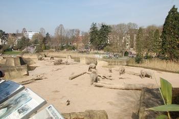 zoo cologne d50 2012 134