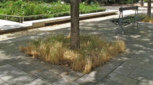 herbes folles arbre