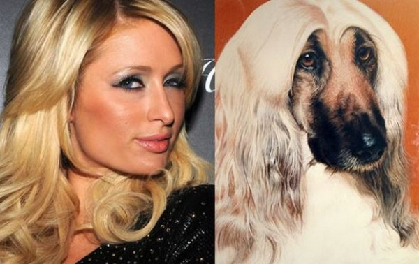 3. Paris Hilton with a serious competitor and a dog willing to steal the show from Samuel L Jackson