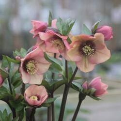 Promesse de fleurs et de nouveaux bonheurs
