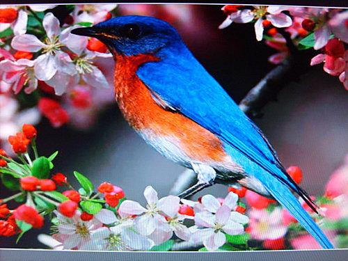 oiseaux-026.JPG