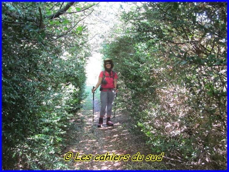 Gorges du Tarn, de St Chély à Hauterives