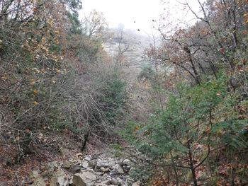 Dans le lit du ruisseau. Au fond, dans le brouillard, le relief caractéristique des Escarettes (strates de calcaire bien découpées )