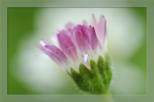 Fleurs du Parc au matin