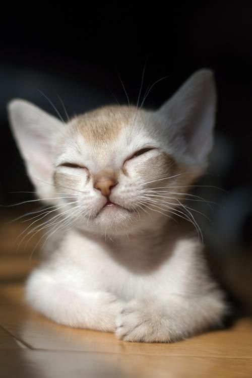 The Cat's Meow - Le monde des monstres terrestres  #beautyhairphotography #monde #monstres #terrestres