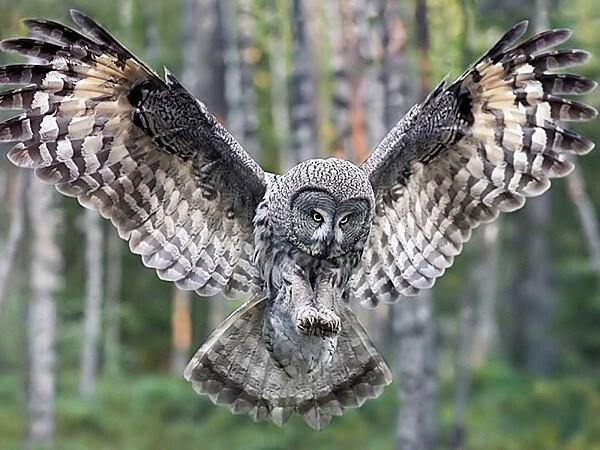 Owl-owls.jpg