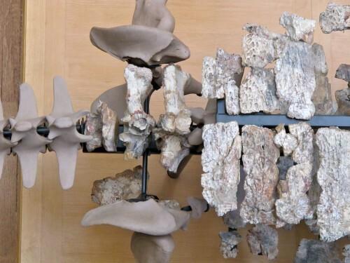Sarcosuchus 0422