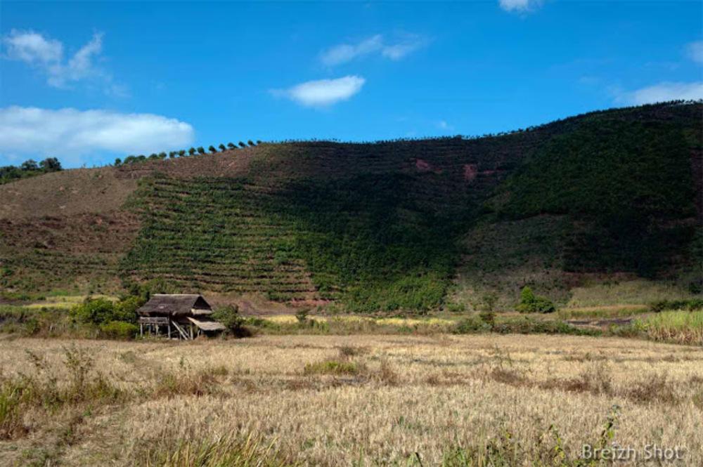 Maison tribale près de Muang Sing - Laos