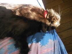 La vie idéale d' un chat ...