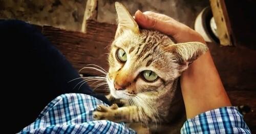 Les chats reconnaissent leurs maîtres