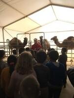 Les élèves de Ce1 B au Cirque Bormann