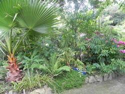 Un jardin exotique en Finistere