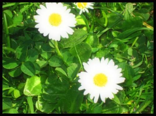 fleurs, saison