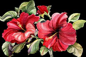 fleur10.png