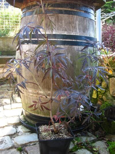 Les Plantomnales de brest