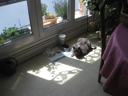 Fofo, le chat de la maison