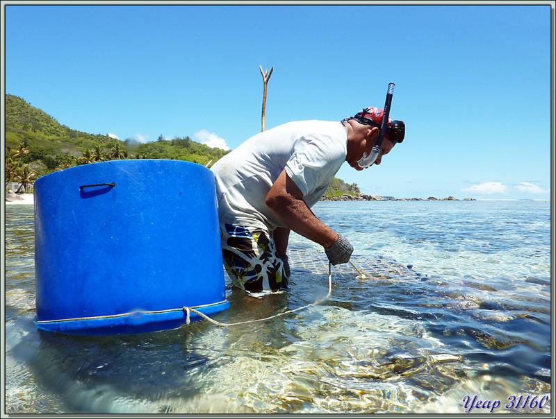 Pêcheur au casier - Anse Marie-Louise - Mahé - Seychelles