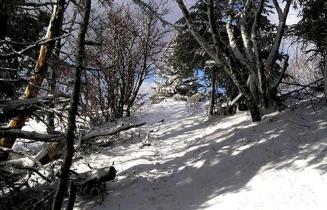 partage photos de janvier : décors de Noël, paysages de montagnes hivernaux, gourmandises de Noël
