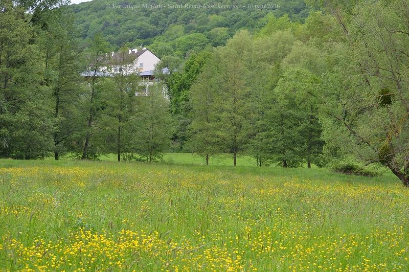 Réserve naturelle régionale du Val et coteau de Saint-Rémy