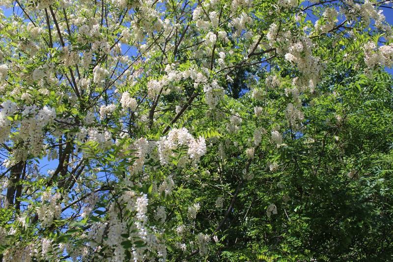 Les fleurs du village
