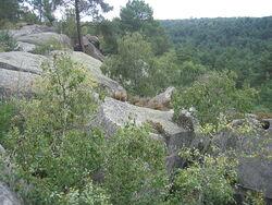 La forêt de Franchard site superbe en Forêt de Fontainebleau