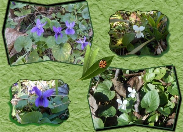 Fd-carte-violettes-copie-1.jpg