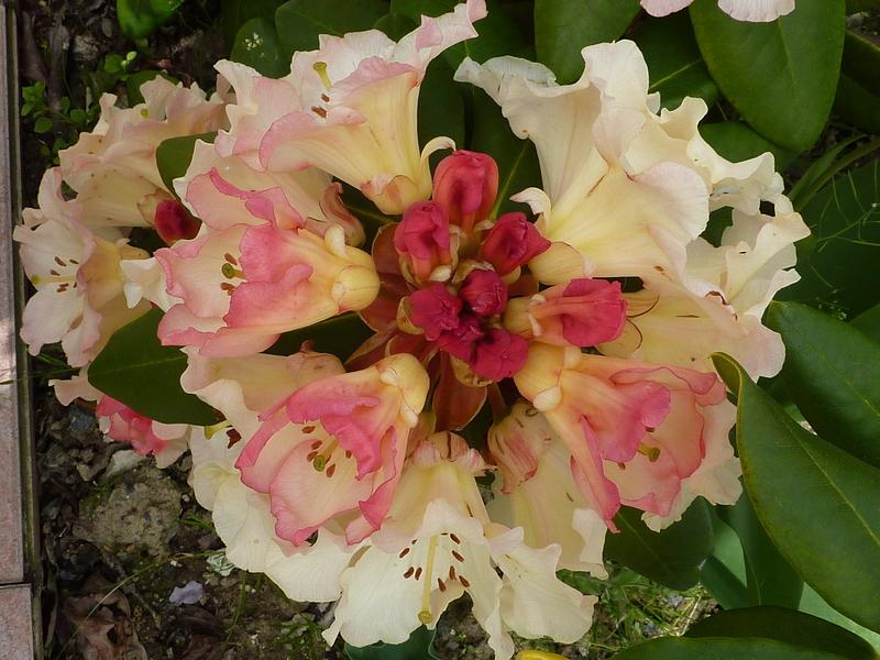 Floraison du dimanche