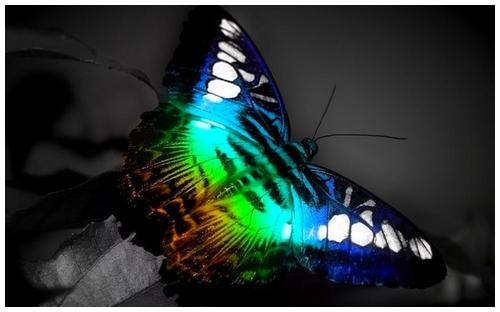 le papillon au crochet