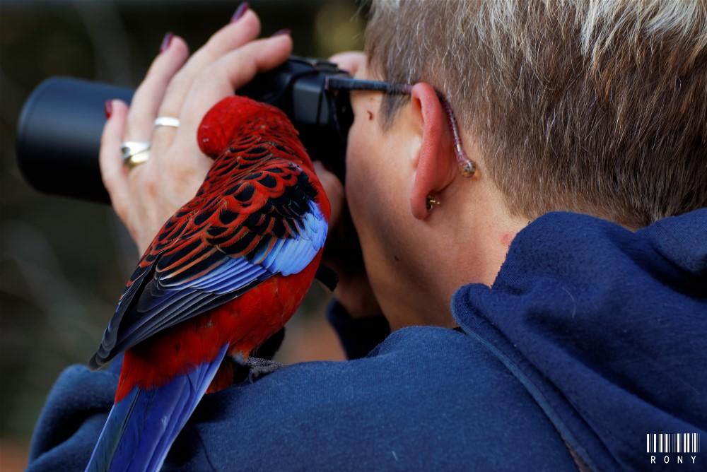 Les risques du métier de photographe animalier en parc zoologique  :-)