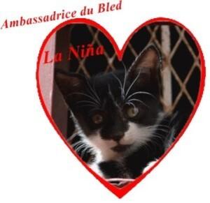 Chat du bled La Niña ambassadrice 01