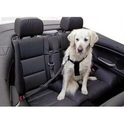 Nos amis canins en voiture, comment ?