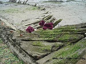 Bilo et Loba en Bretagne24