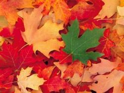 Le vocabulaire de l'automne