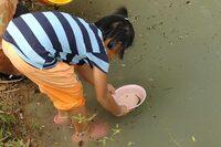 On relache le jeune poisson chat dans le klong familial