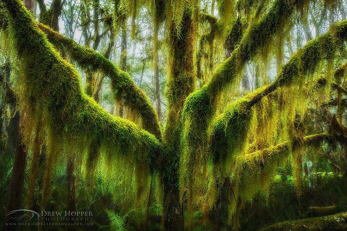 Ces arbres parmi les plus beaux de la planète, une vraie bouffée d'air frais