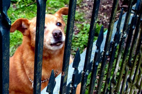 Le chien d'un voisin