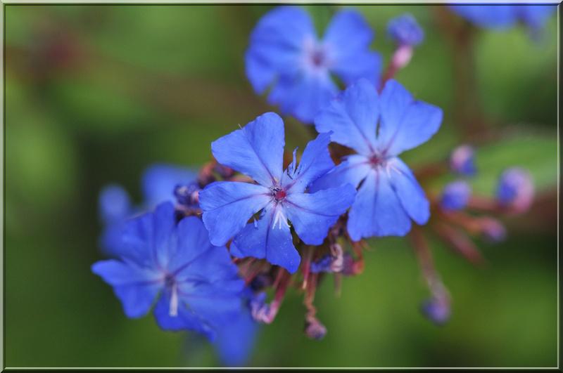 Fleurs des 4 saisons (#2)